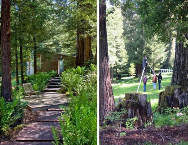 California dream house in the woods  (9)