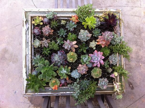 diy-vertical-succulent-garden-10