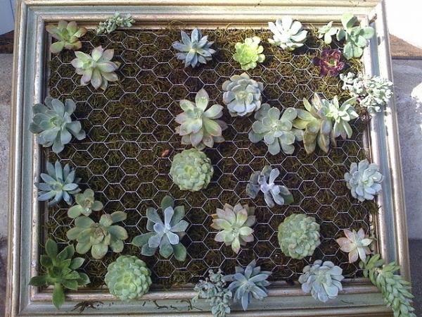 diy-vertical-succulent-garden-4