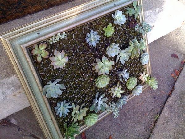 diy-vertical-succulent-garden-5