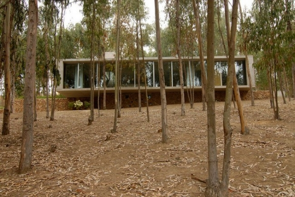 chilean-forest-house-6