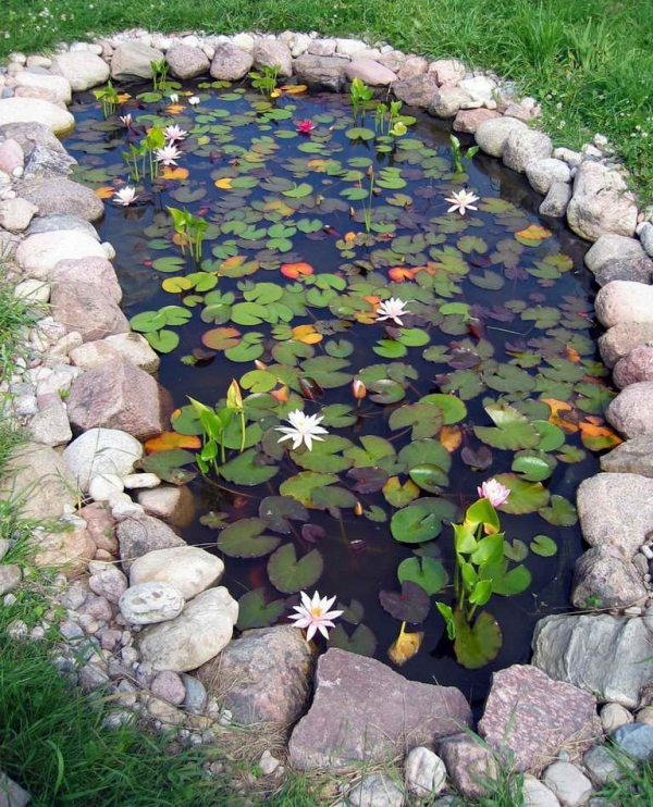 How to build a pond in your backyard adorable home for Making a fish pond in your garden