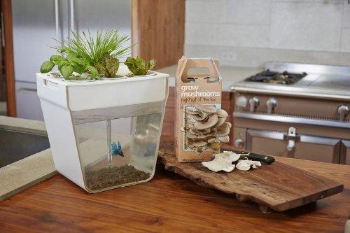 Fish tank maintenance at home aquarium2 2017 fish tank for Hydroponic aquarium with fish