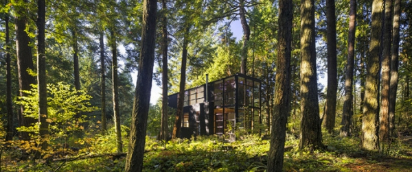 modest home in the woods (2).jpg