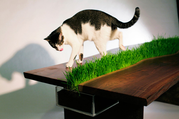 organic-cat-friendly-table-3