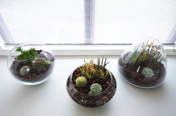 simple-and-beautiful-diy-terrarium-5
