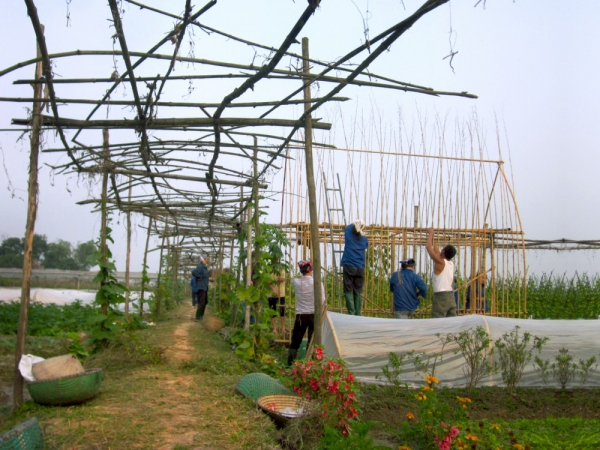think-sustainable-with-this-vegetable-nursery-house-5