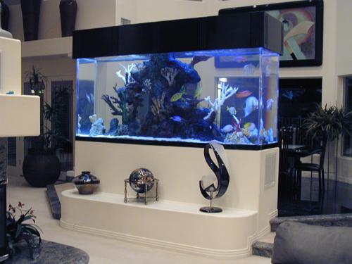 top-class-aquariums-3