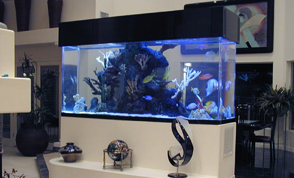 Top Class Aquariums by Acrylic Tank Manufacturing