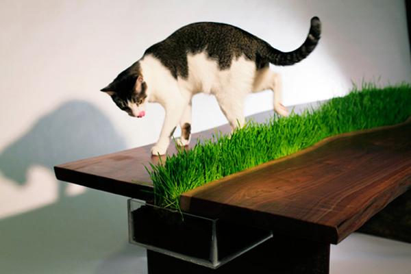 Organic cat friendly table (3)