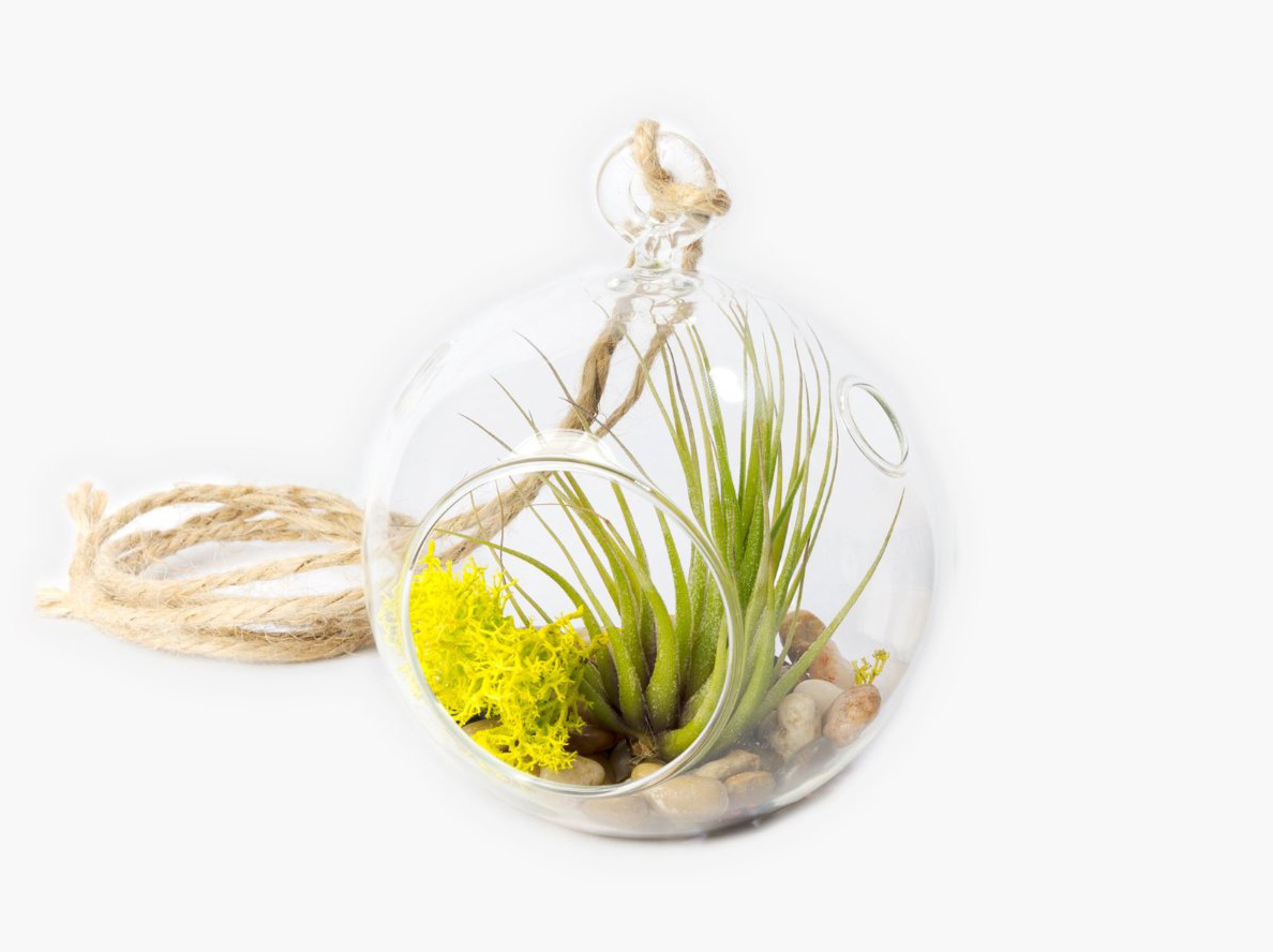 Pretty glass hanging terrarium