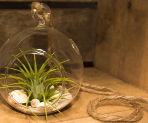 Pretty glass hanging terrarium