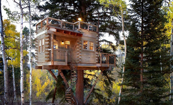 Tree House Architecture