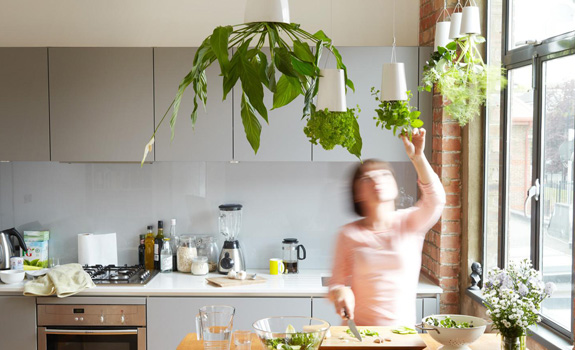 Hanging plants in the kitchen