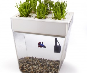 Dual benefits: fish tank and herb planter