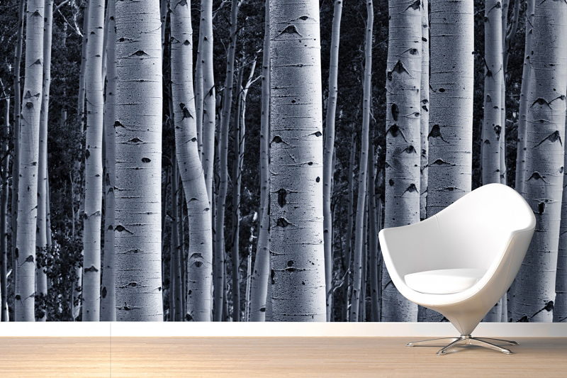 Silver Birch Forest Wallpaper Part 85