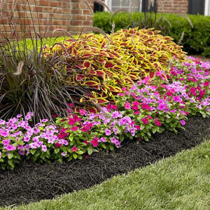 Low maintenance landscaping ideas for any region for Low maintenance plants for front of house