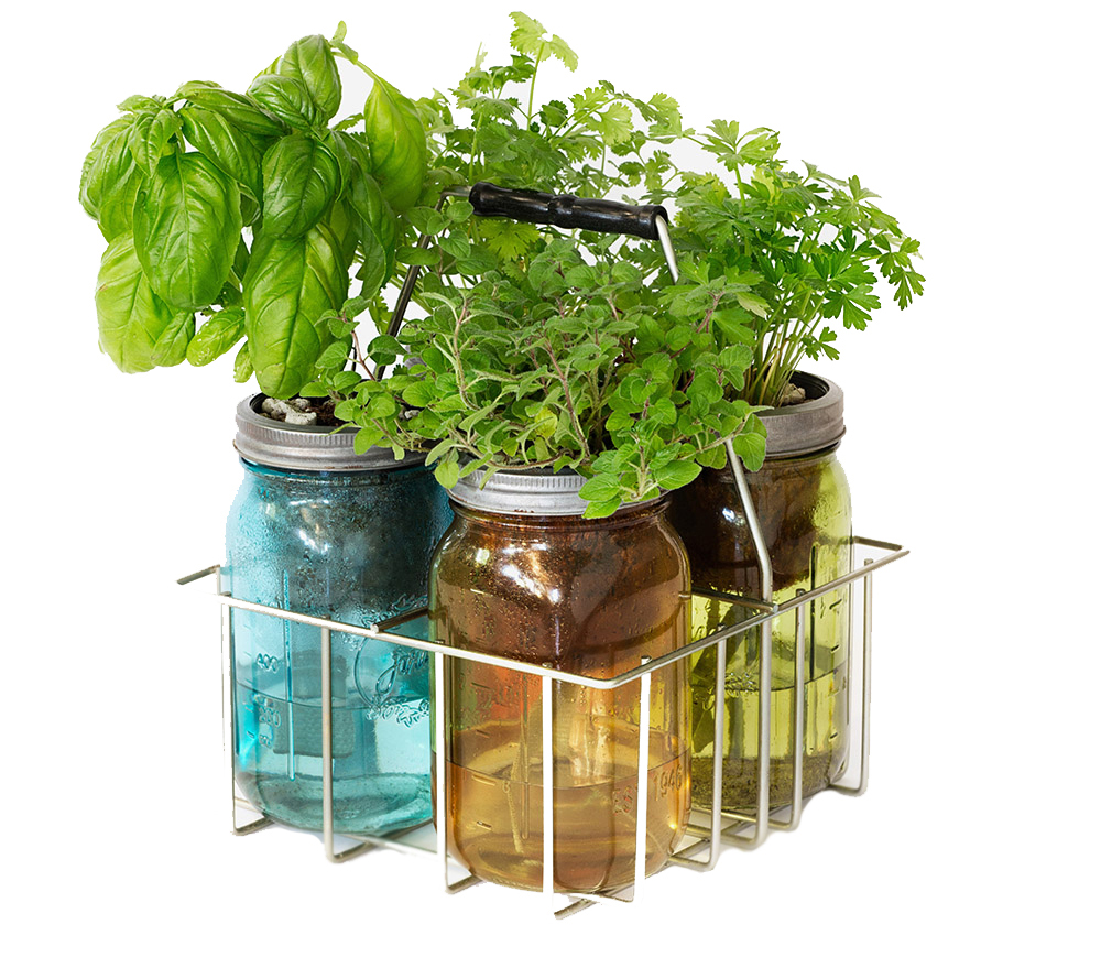 Four glass jars with herbs