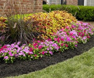 Low maintenance landscaping ideas for any region