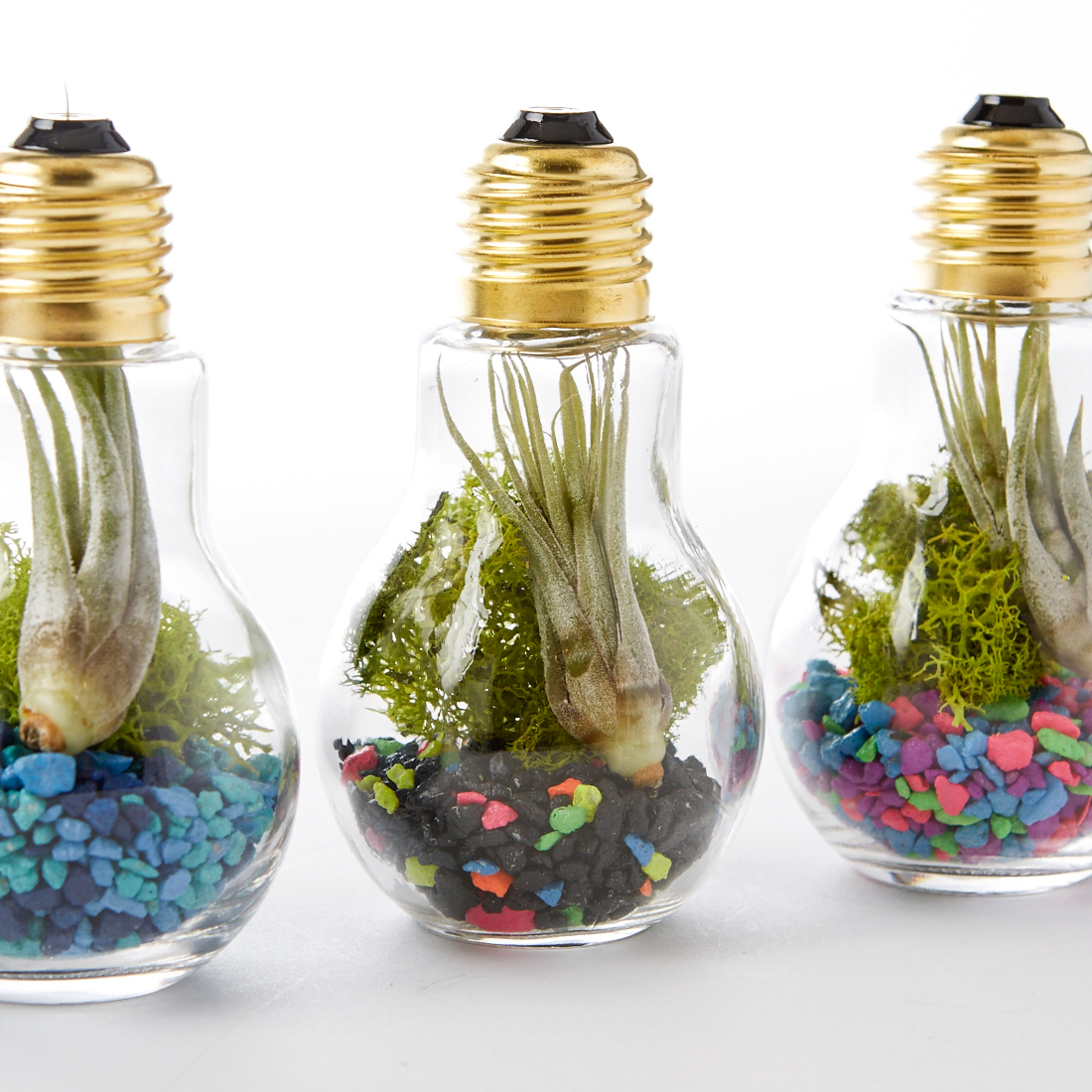 3 light bulb-terrariums