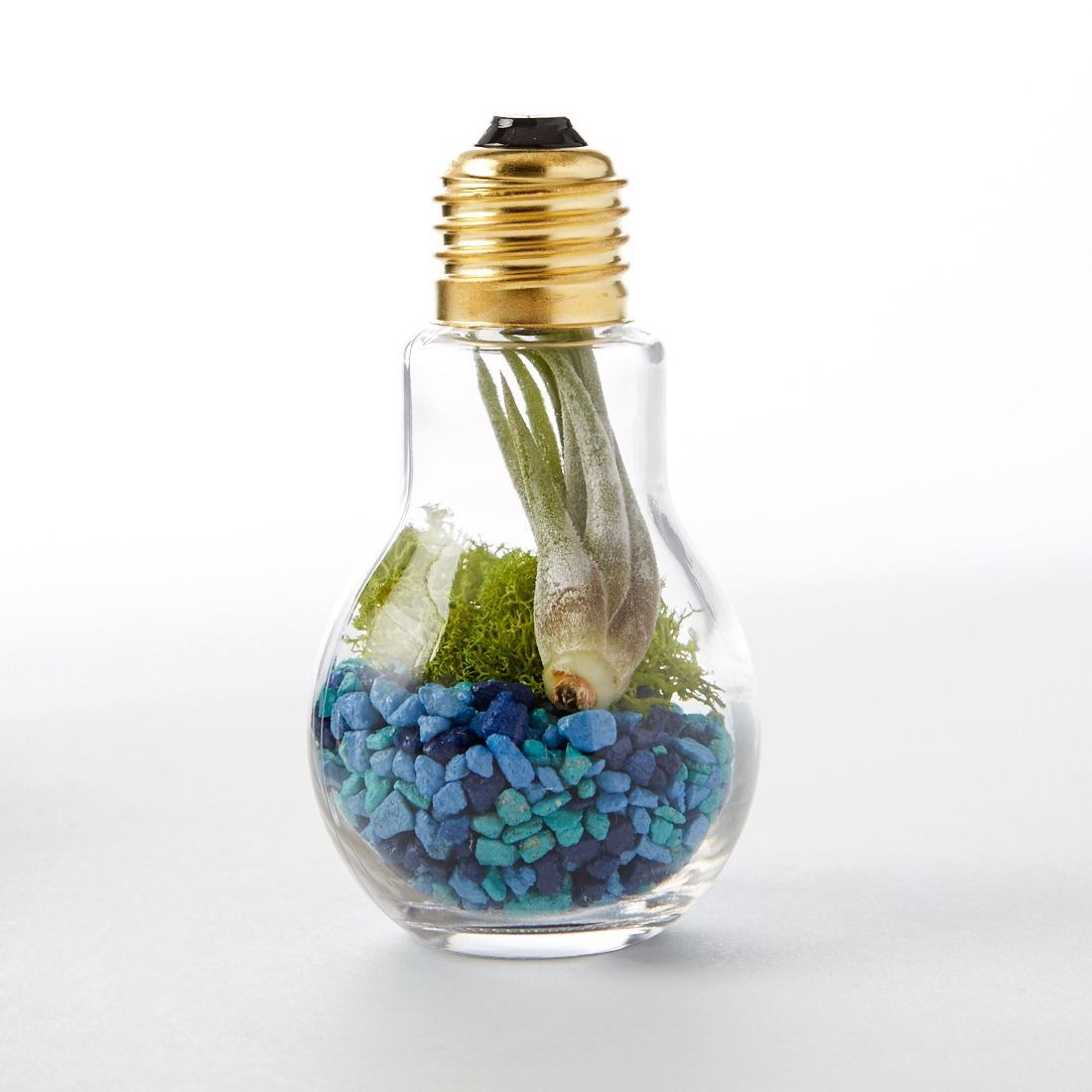 Diy Light Bulb Terrarium Adorable Home