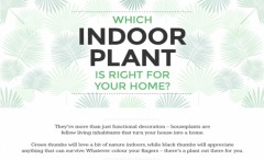 Advices about indoor plants