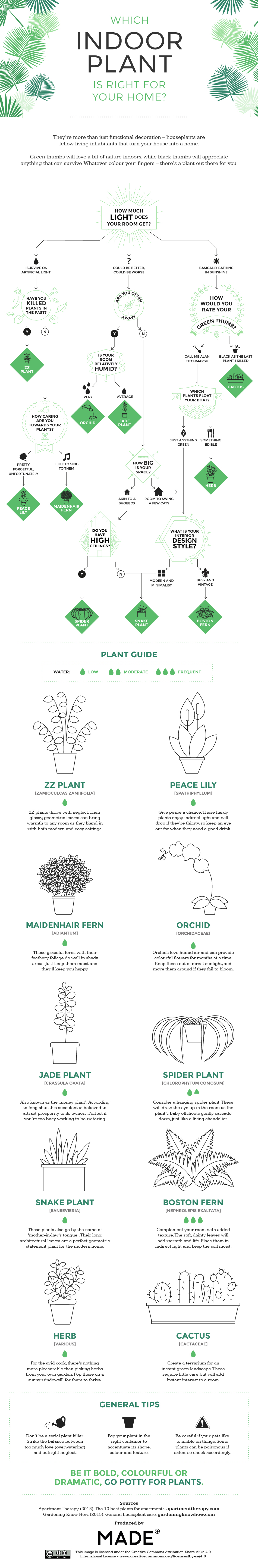 Which indoor plant is the right - infographic by Made