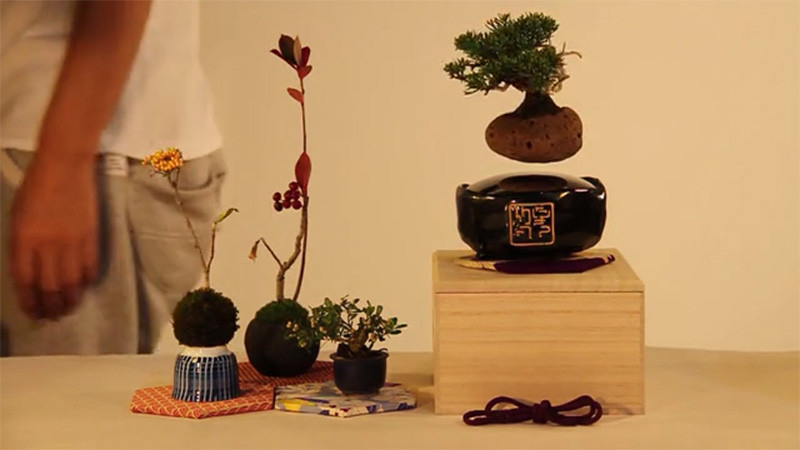 Air Bonsai concept