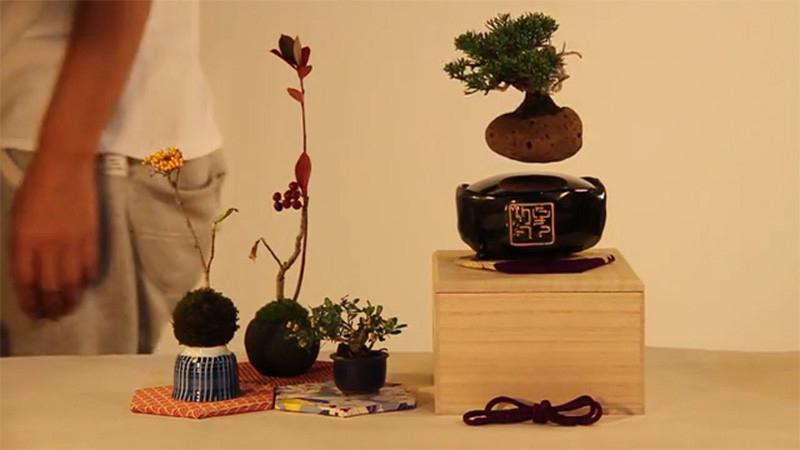 Air Bonsai concept
