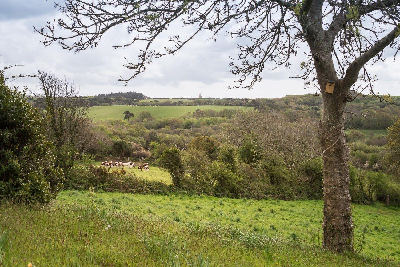 Cornwell, UK, Hillside area