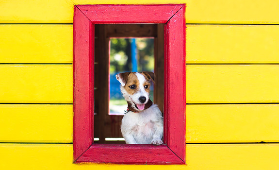 The Most Adorable Dog Houses Ever!