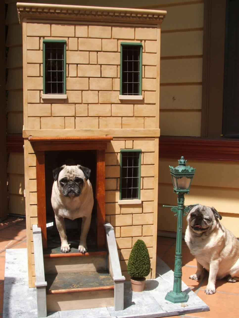 Two story dog house for pugs
