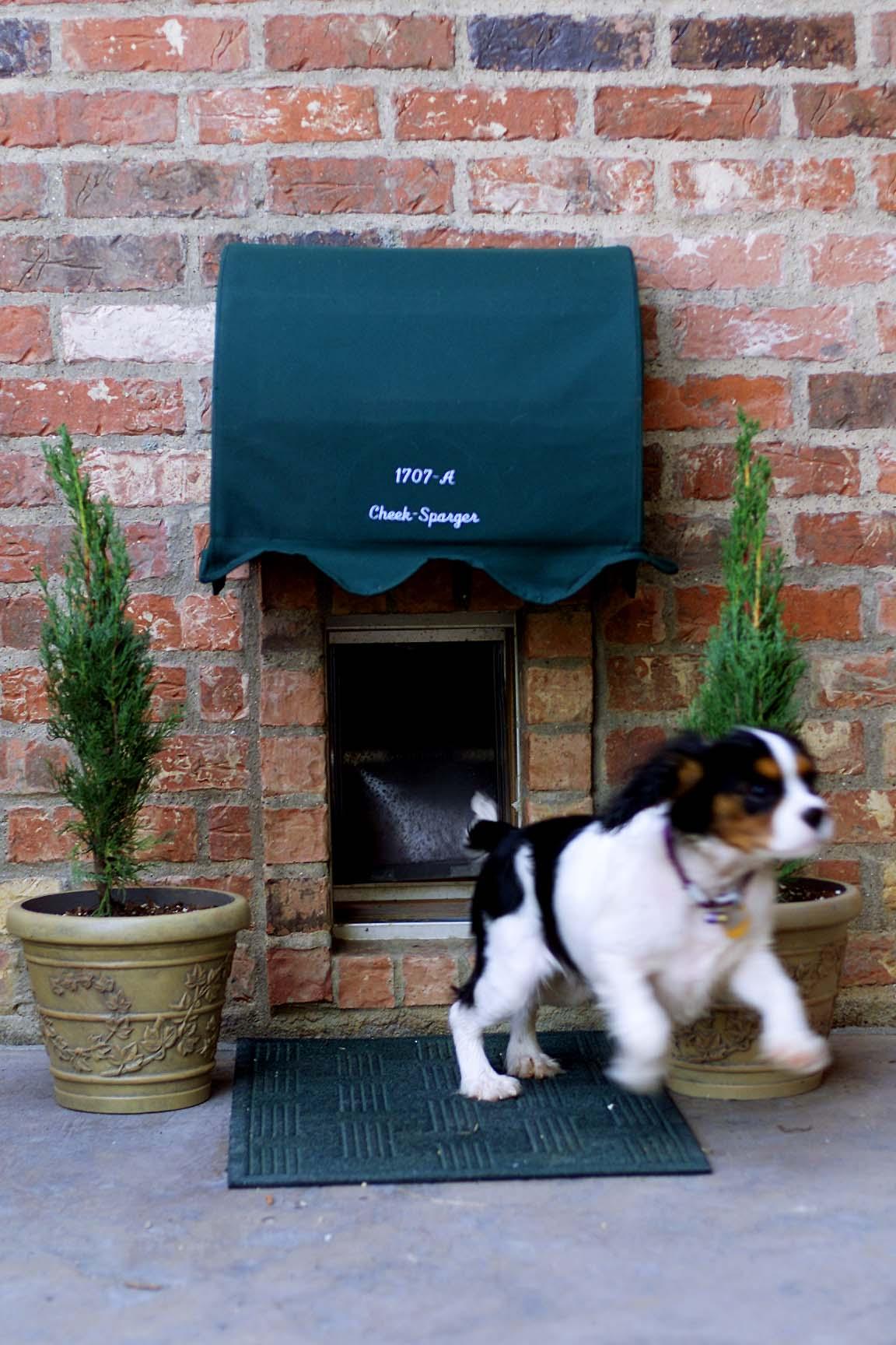 Stylish dog house entrance