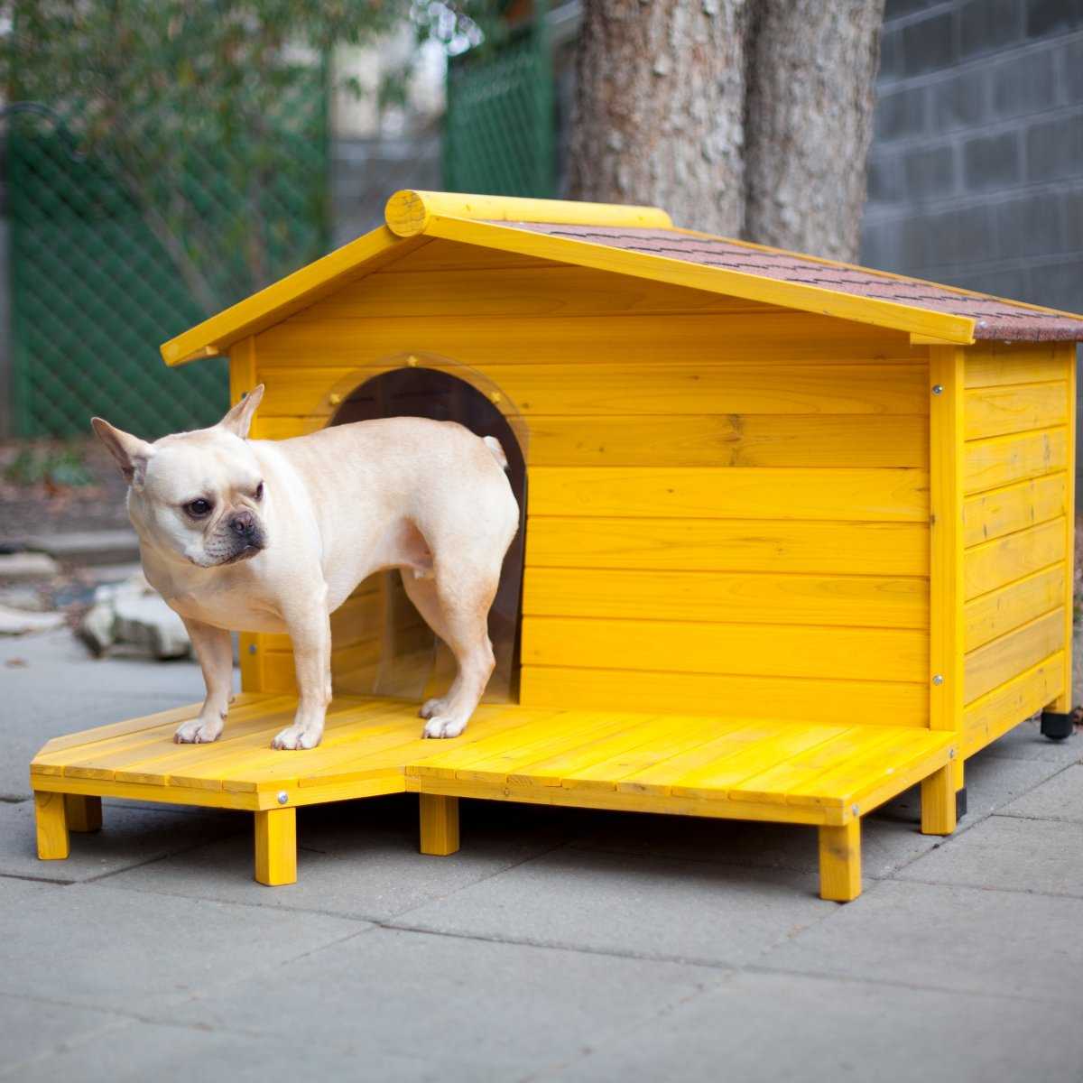 Cute yellow dog house