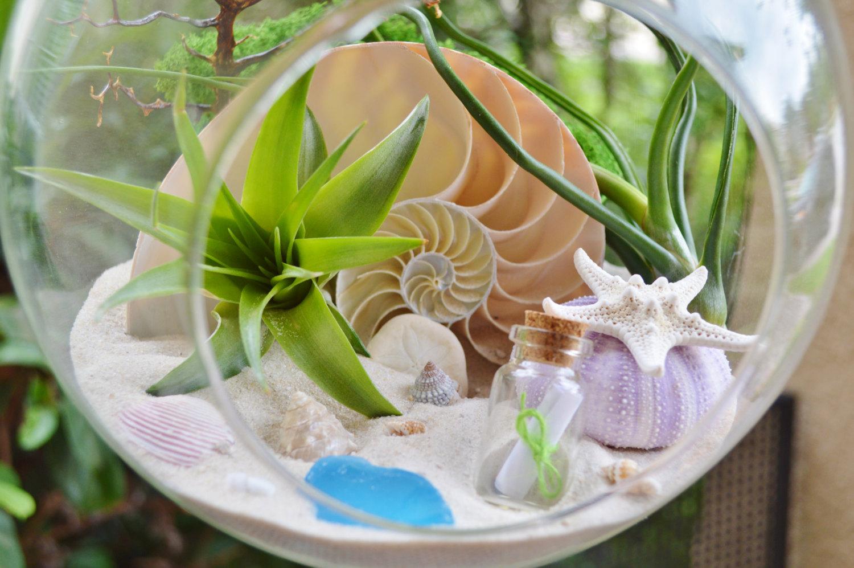 Glass terrarium with shells