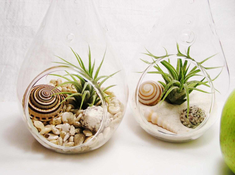 Glass beach terrariums