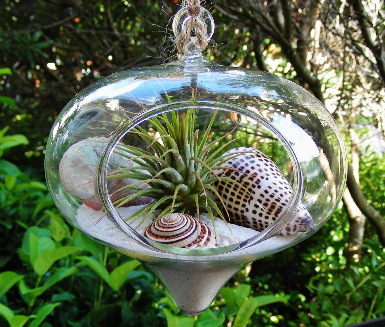 Hanging beach glass terrarium