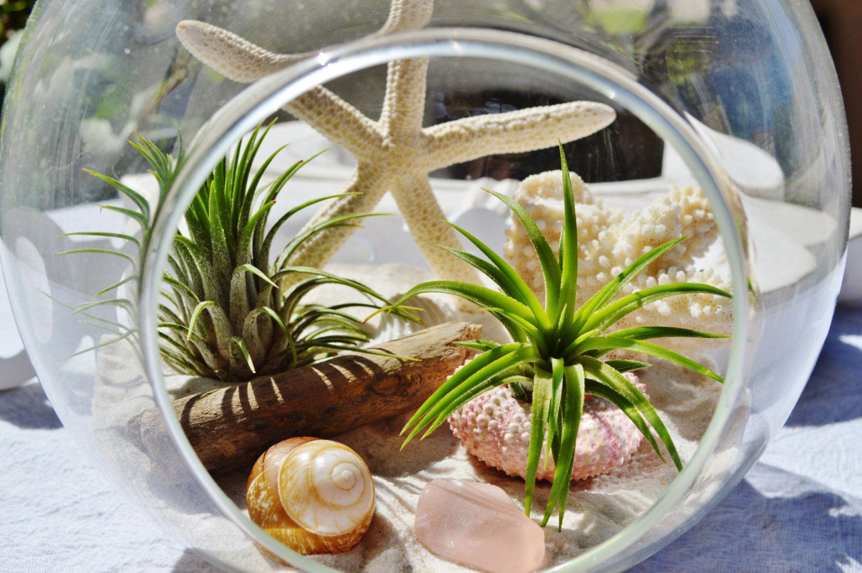 Beach terrarium with a strafish