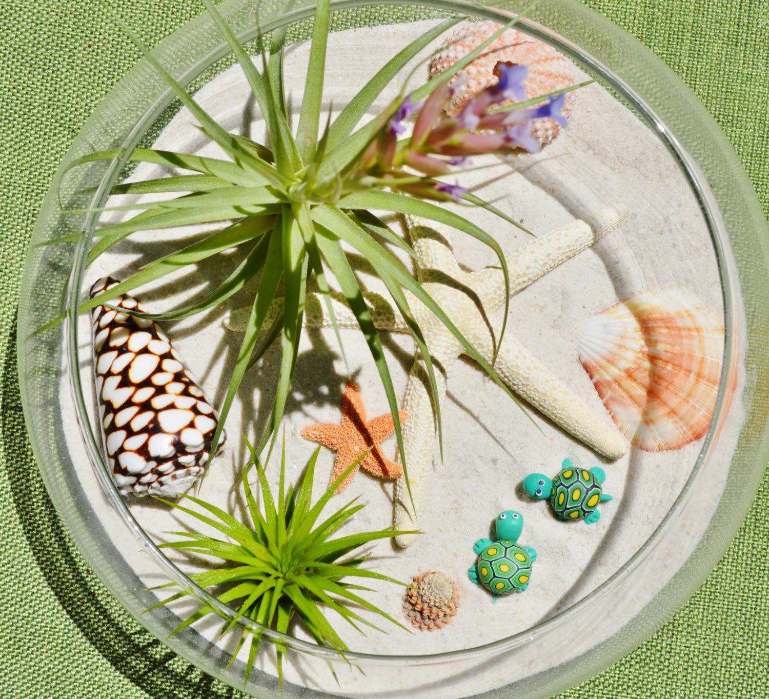 Beach glass terrarium with sand and shells