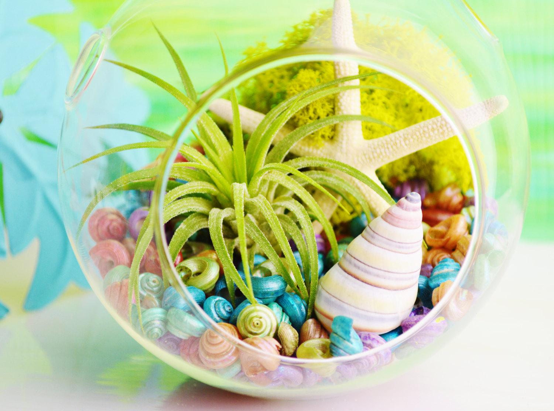 Colorful glass terrarium
