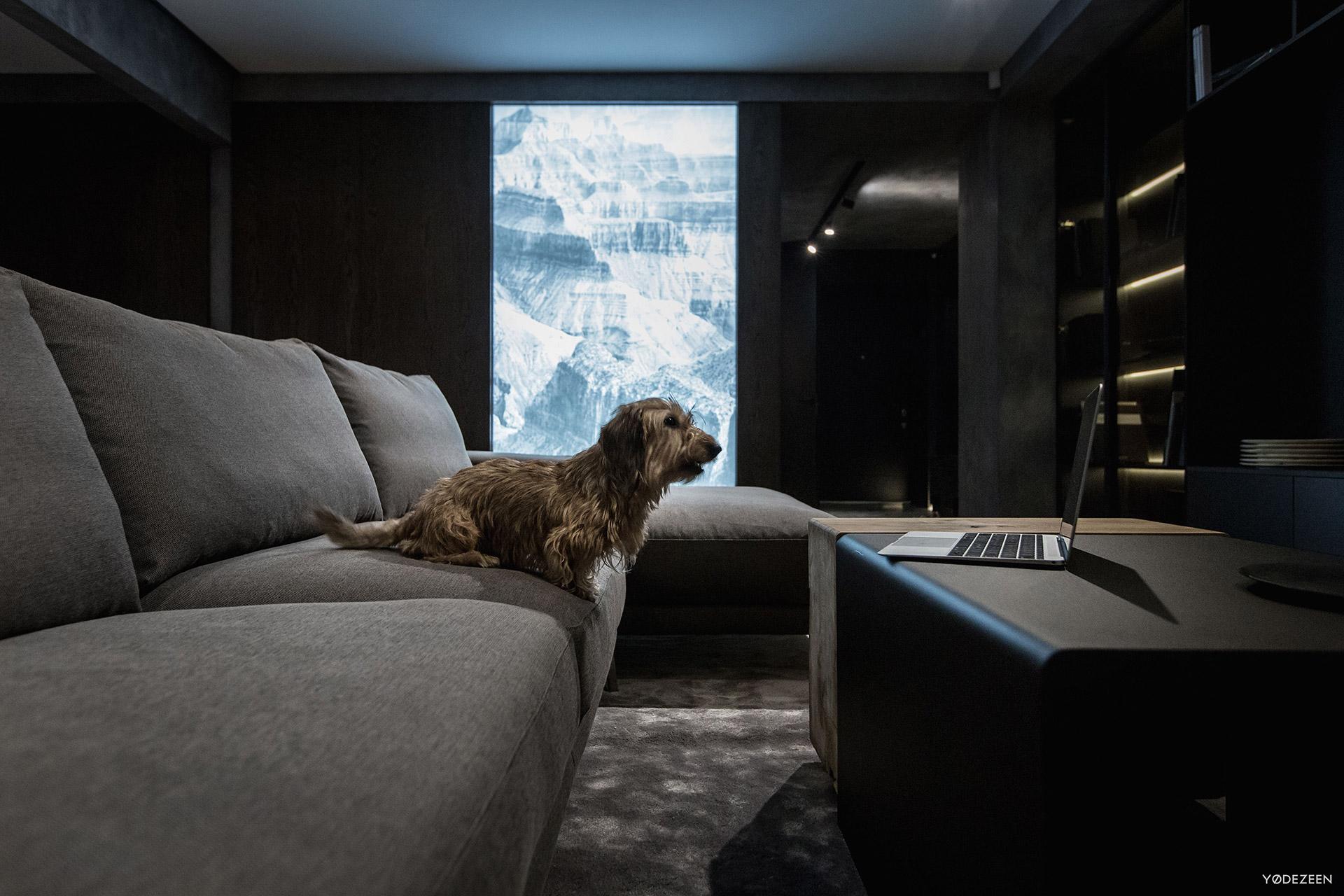 Grey sofa and a dog