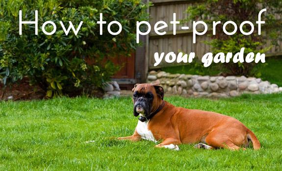 How to Pet-Proof Your Garden