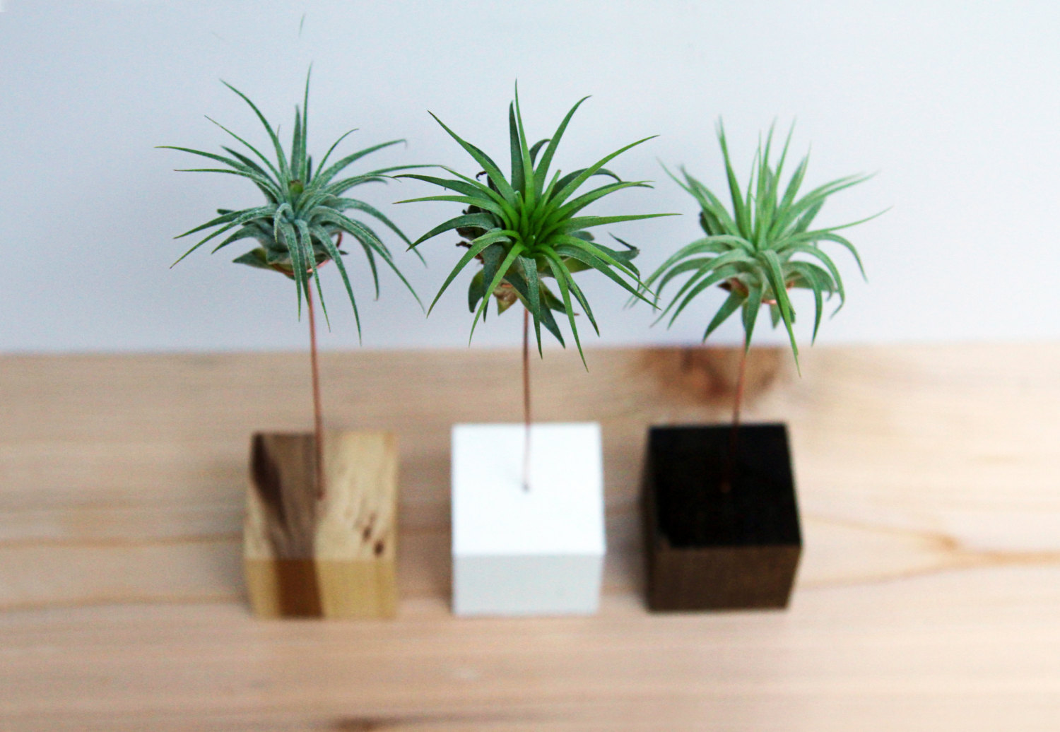 Air plant stands