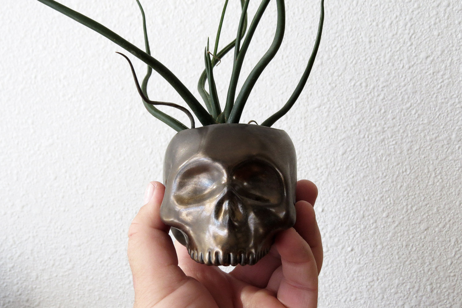 Classy Skull Planter For Any Decor Scheme Adorable Home