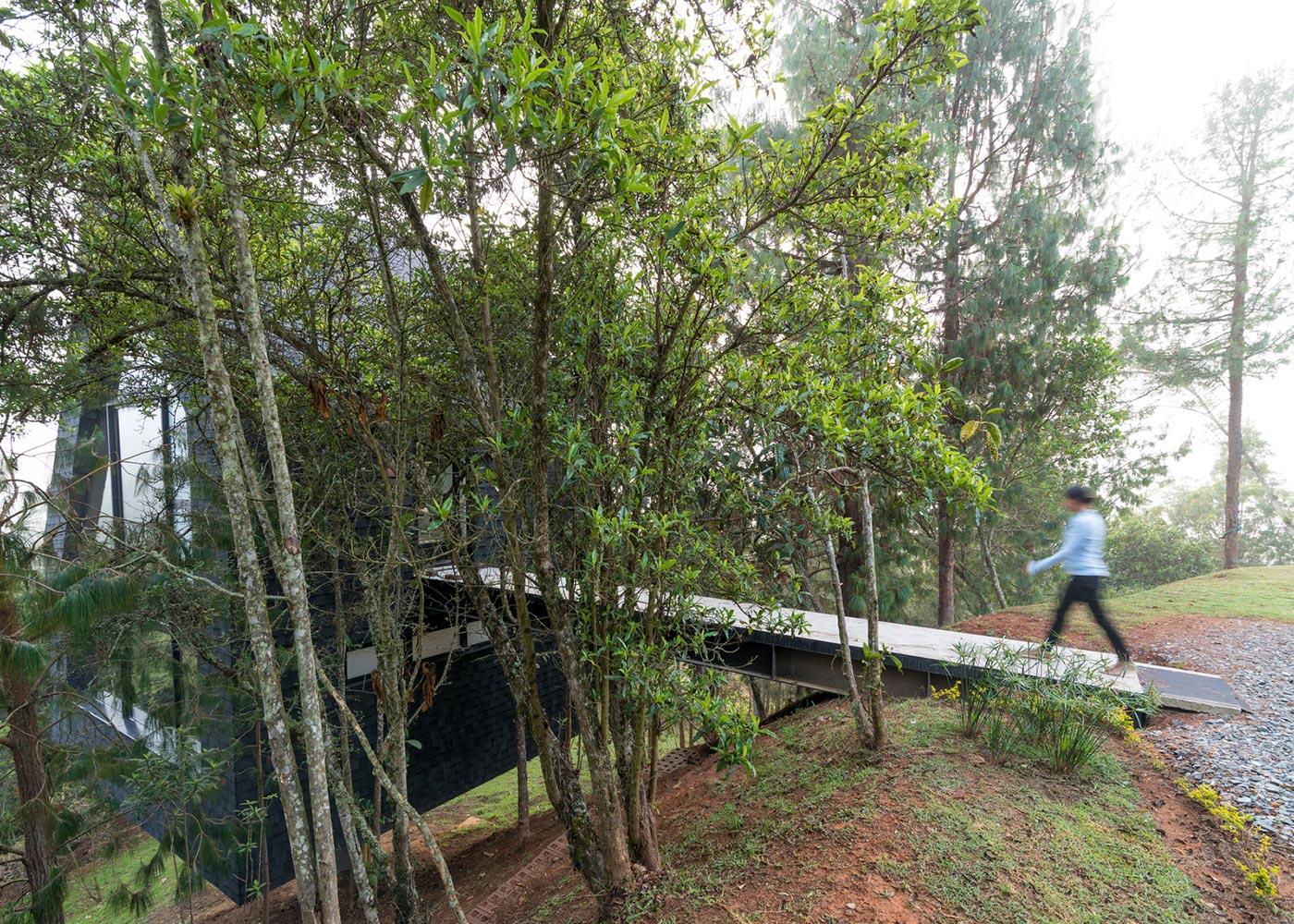 Forest bridge path