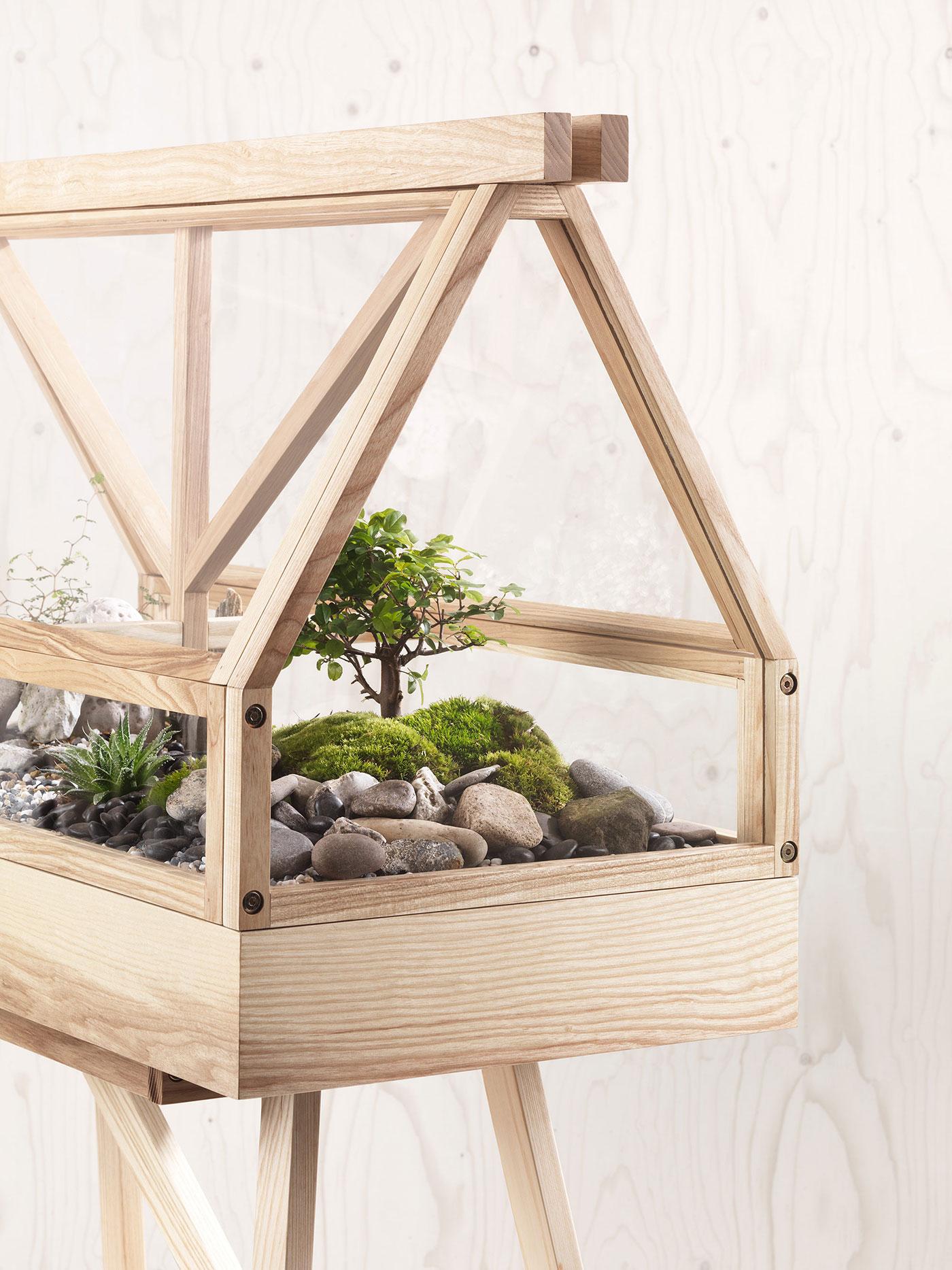 Indoor garden with bonsai tree