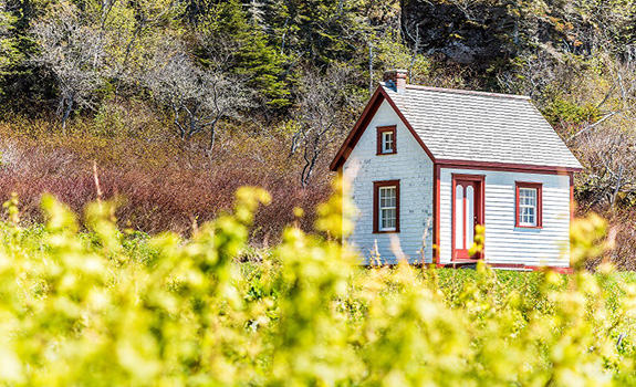 What to Look for in a Piece of Land for Your Tiny Home