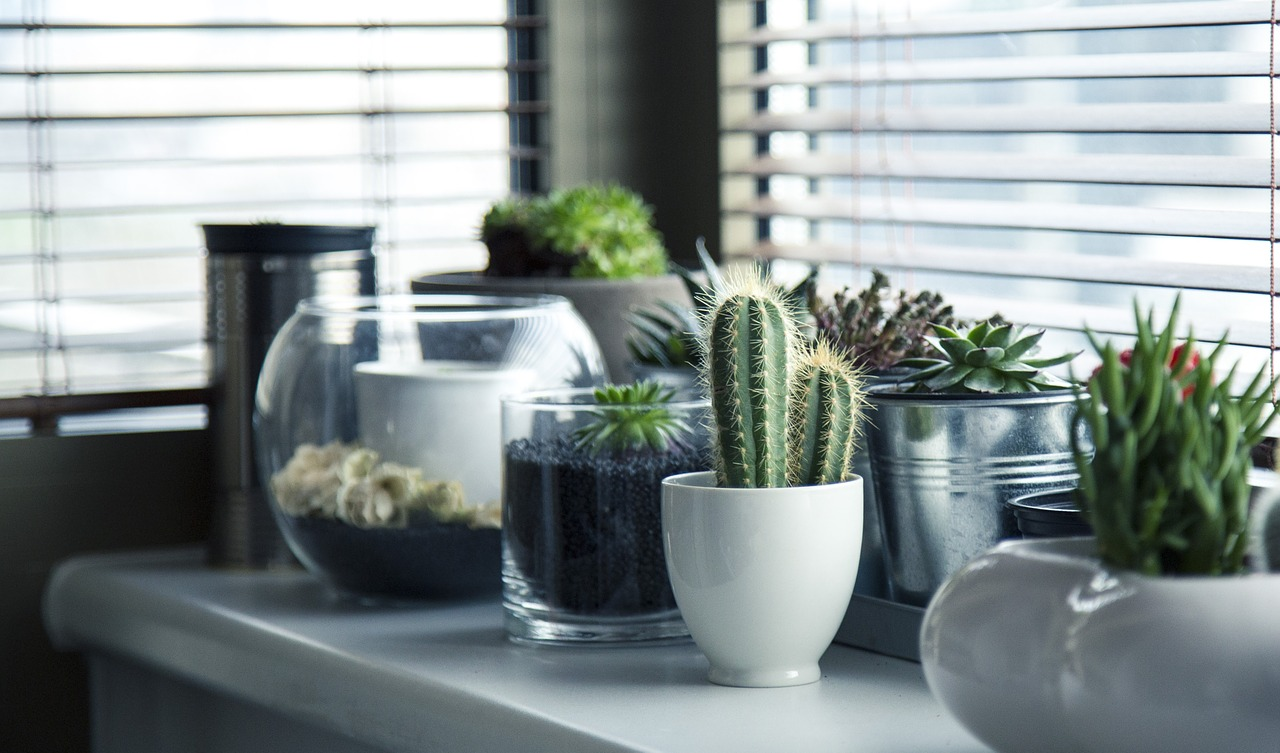 Succulents on the windowsill