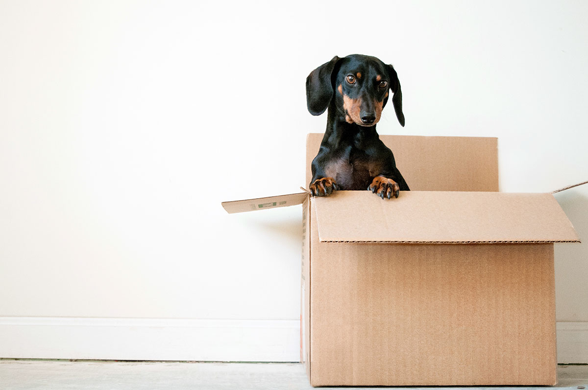 Dog in a brown box