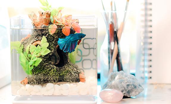 3 Beginner Friendly Aquarium Setups for Your Home